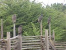 Old growth split rails. NO WAITING...our old growth is dry and ready to go!